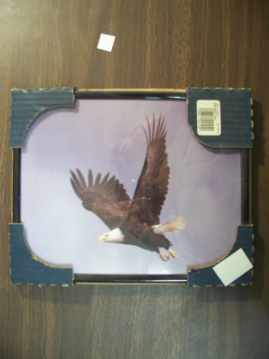 Bald Eagle Picture in Black Frame